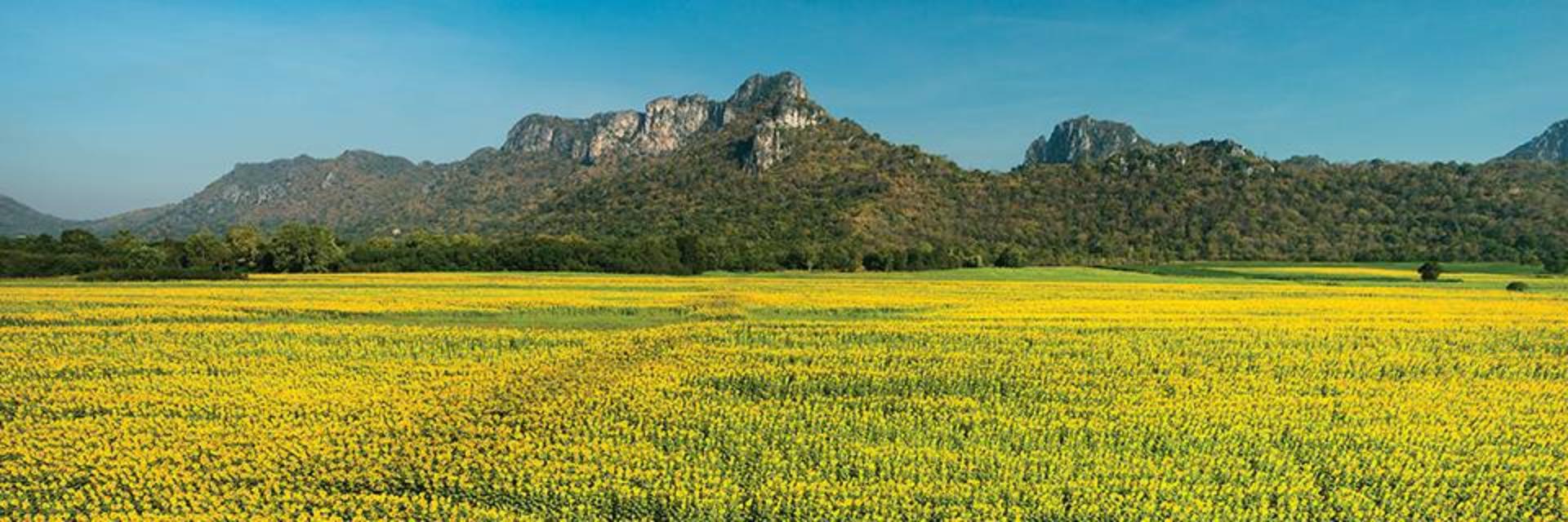 ประเทศไทย : เดือนกุมภาพันธ์