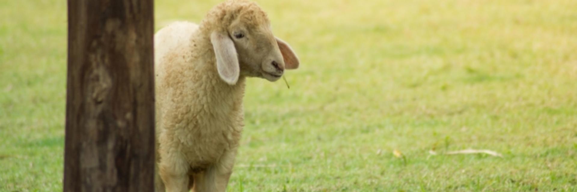 เดินชมฟาร์มแกะ สัตว์น้อยใหญ่แสนน่ารัก สัตว์หาดูยากที่ วีว่า ฟอเรสต้า ฟาร์มจังหวัดจันทบุรี