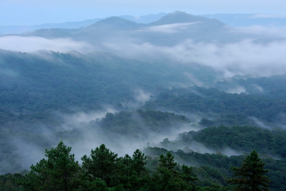 Mountain Savouring the Greens at Doi Inthanon, Chiang Mai