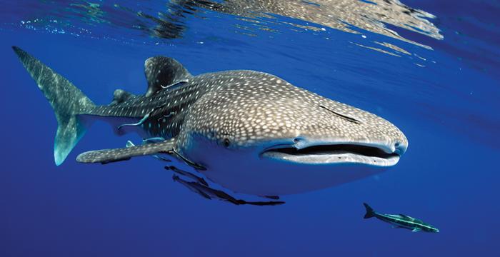 กินปู ดูฉลามวาฬ ที่ เกาะร้านเป็ด-เกาะร้านไก่ จ.ชุมพร